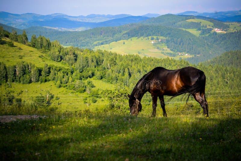一个非常好和有趣的细节 一匹美丽的马在自然财富享用和自由哺养 免版税图库摄影