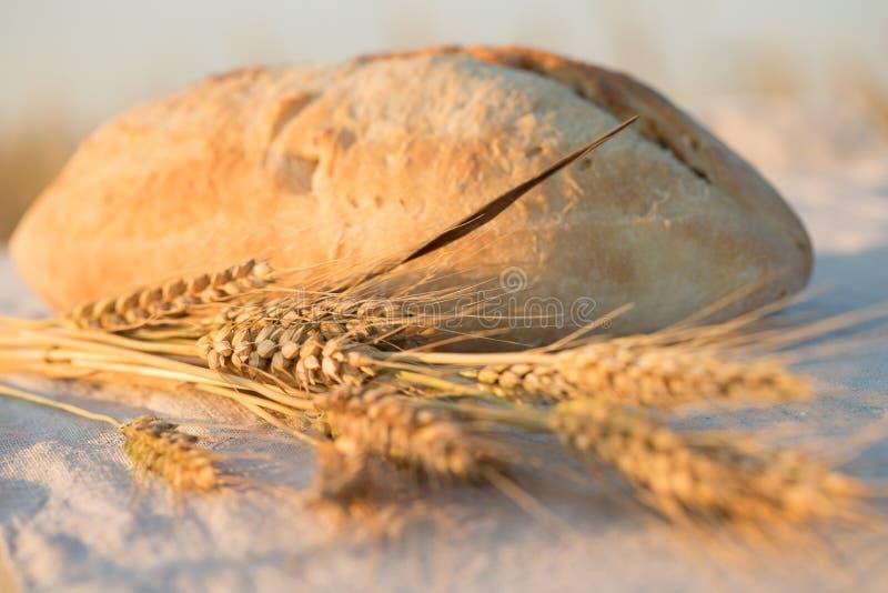 一个面包在阳光下 免版税库存图片