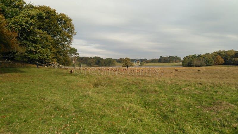 一个领域在有牧群的塔顿公园wilderbeest 库存图片