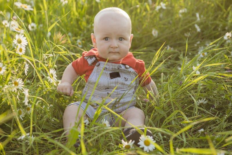 一个领域的小迷人的小孩男孩与雏菊在夏天和微笑 免版税图库摄影