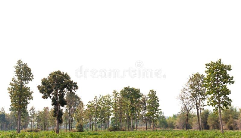 一个高定义Treeline的看法 免版税库存图片