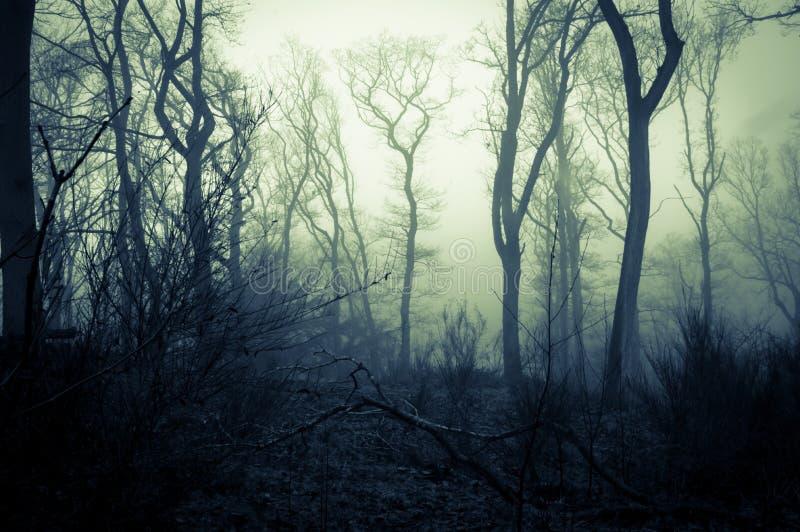 一个鬼的森林在一有薄雾的天在冬天,与发光的令人毛骨悚然的天空 可怕的蓝绿色编辑 图库摄影