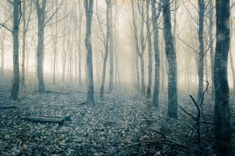 一个鬼,令人毛骨悚然的森林在冬天,当树现出轮廓由雾 一个减弱的声音的,蓝色难看的东西,葡萄酒编辑 库存照片