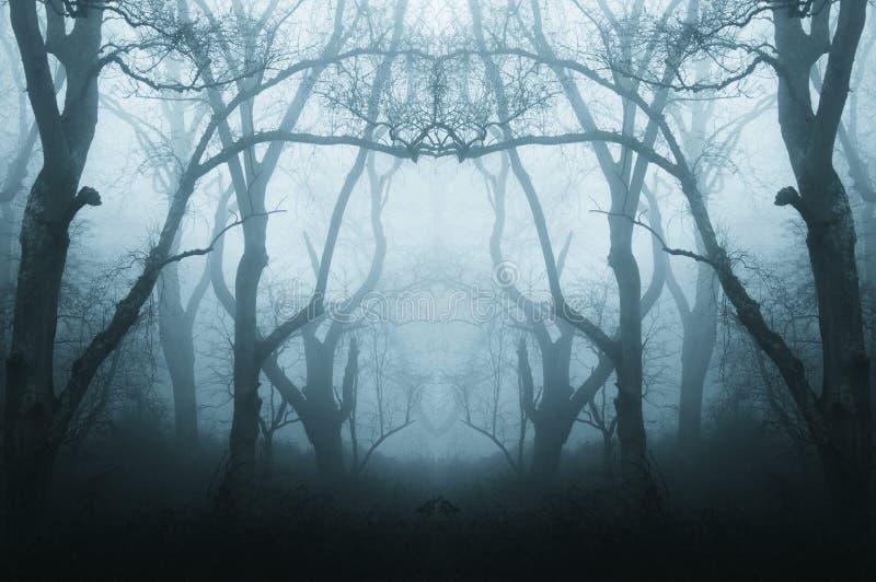 一个鬼,令人毛骨悚然的森林的一个被反映的,复制作用在冬天,当树现出轮廓由雾 减弱的声音,蓝色编辑 免版税库存照片