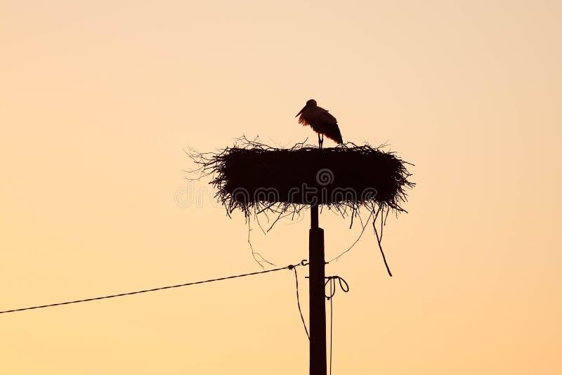 一个鹳身分的剪影在巢的有日落天空背景 免版税库存图片