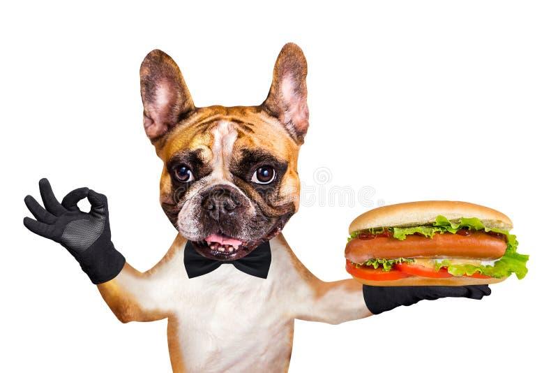 一个黑蝶形领结的滑稽的狗姜法国牛头犬侍者拿着一热狗用香肠和小圆面包并且大约显示标志 ?? 免版税库存照片