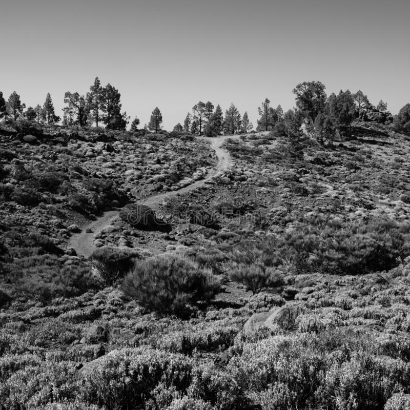 一串卷曲的足迹通过登上泰德峰原野 库存图片
