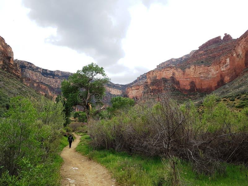 一串足迹的远足者在大峡谷 免版税图库摄影