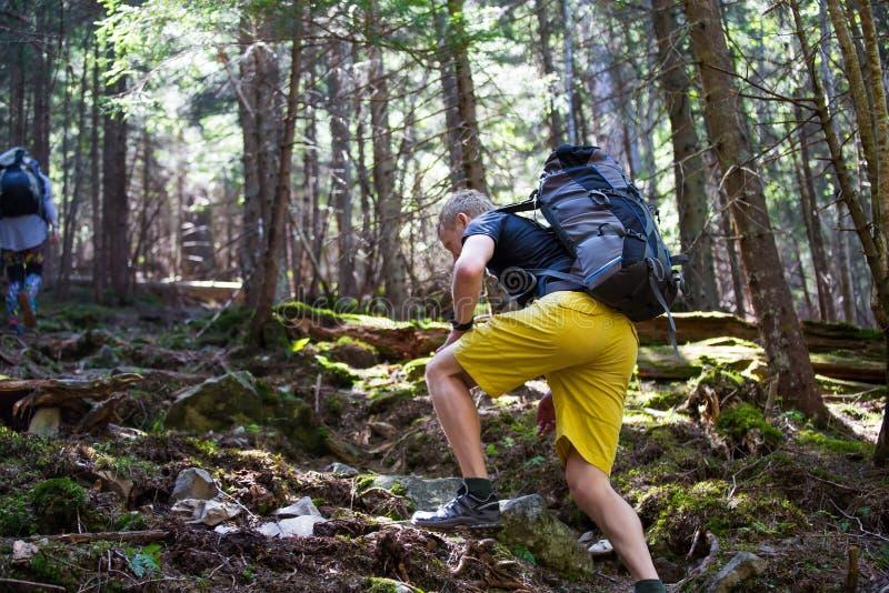 一串足迹的远足者在木头 免版税图库摄影