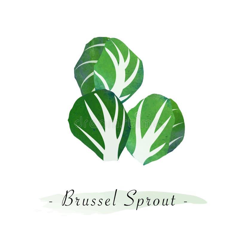 一五颜六色的水彩纹理传染媒介健康菜布鲁塞尔spr 库存例证