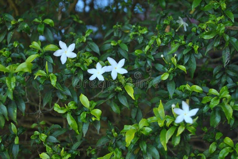 一些与的开花花叶子 图库摄影