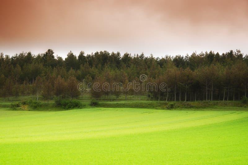 一些反弹严格晴朗那里不是的蓝色云彩日由于域重点充分的绿色横向小的移动工厂显示天空是麦子白色风 库存照片