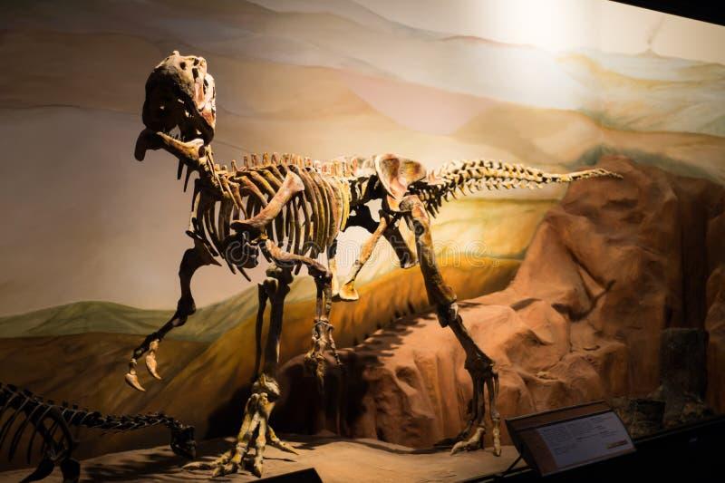一些恐龙化石复制品照片  免版税库存图片