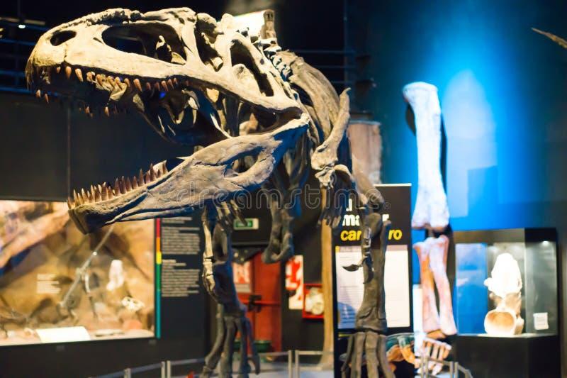 一些恐龙化石复制品照片  免版税库存照片
