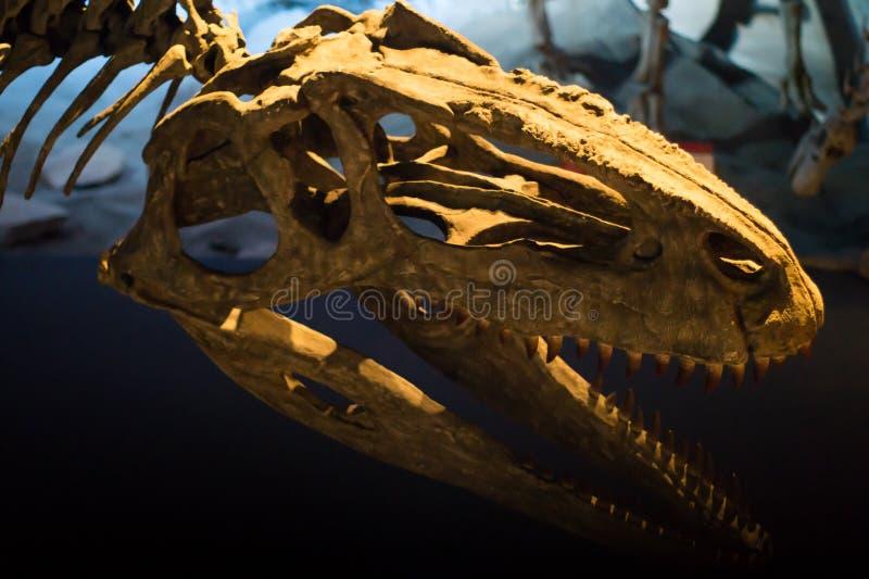 一些恐龙化石复制品照片  免版税图库摄影