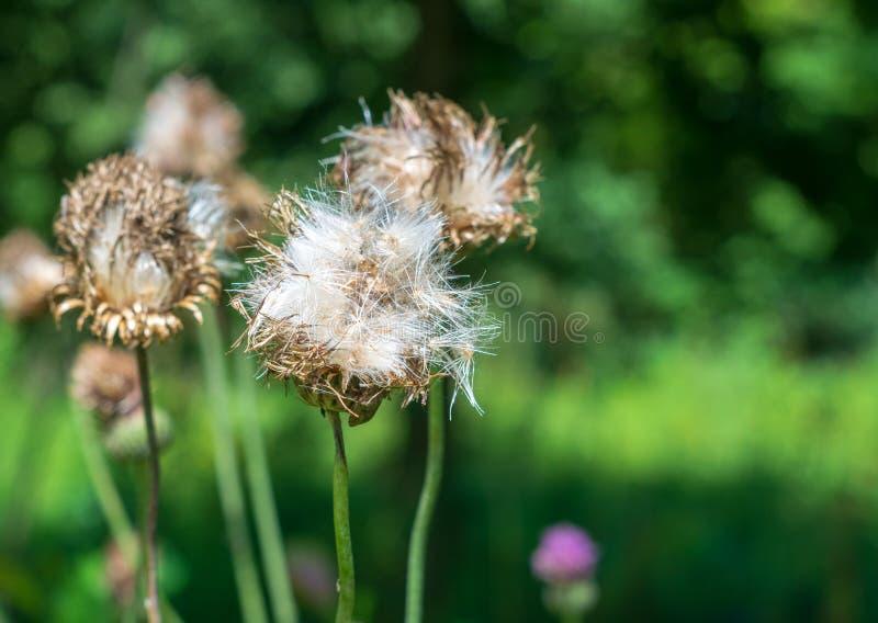 一些朵野花在一个晴天 免版税库存图片
