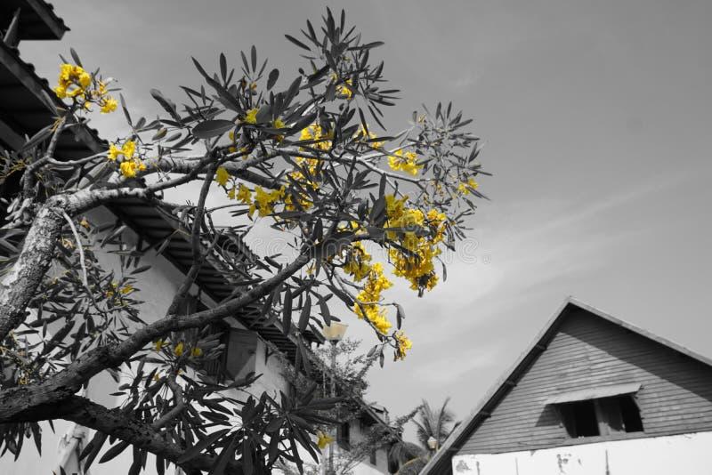一些黄色花 库存图片