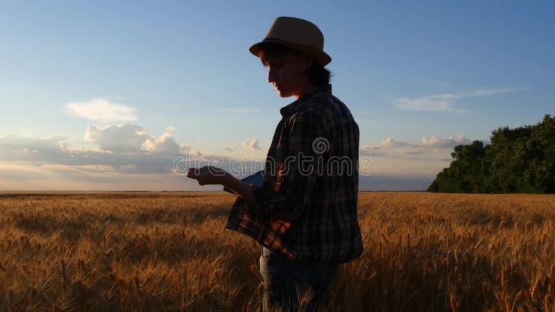 一件方格的衬衣的一位女性农夫走与片剂的麦田并且检查庄稼的质量 免版税库存照片