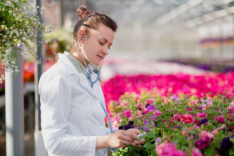 一件白色外套的一名科学家生物学家妇女自温室关心并且测试花 免版税库存照片