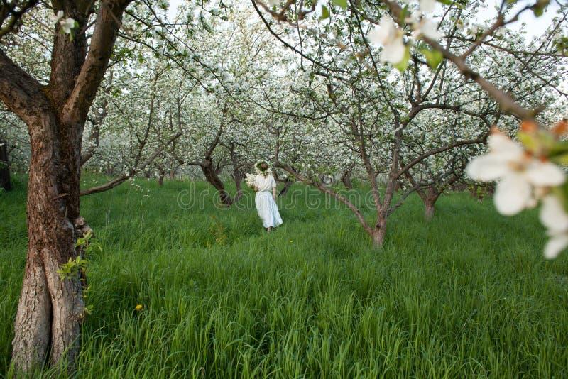 一件礼服的年轻美丽的白肤金发的妇女在开花的苹果庭院里-户外 免版税库存照片
