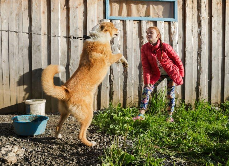 一件红色夹克的女孩,戏弄红色狗,在木墙壁的背景 免版税库存图片