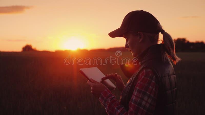 一位女性农夫在领域工作在日落,享用片剂 在agrobusiness的技术 图库摄影