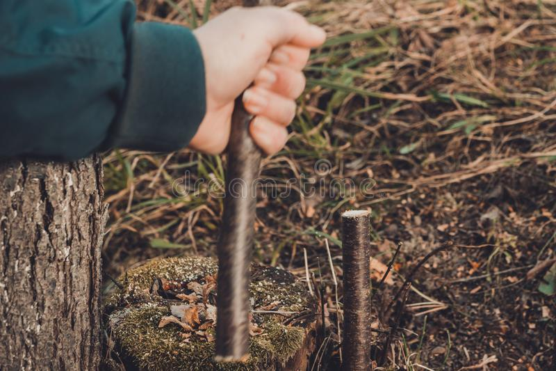 一位女性花匠在庭院里削减一只手在年轻的庭院里,肥沃果树的接种的非肥沃树 免版税库存照片