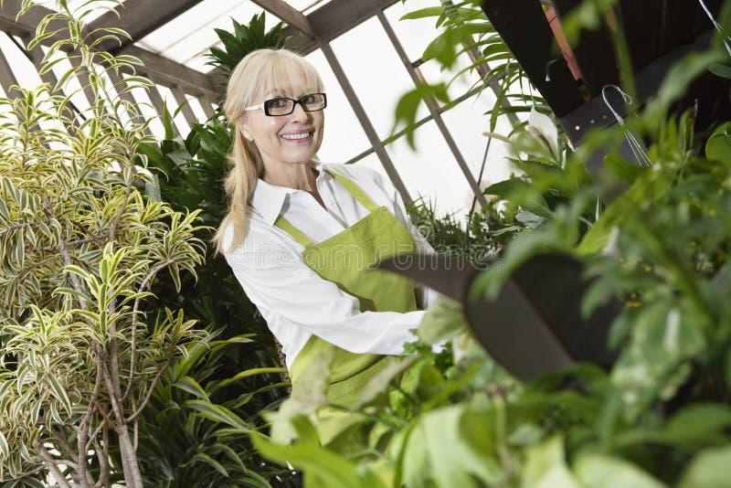 一位愉快的资深花匠栽培植物的画象自温室 库存照片