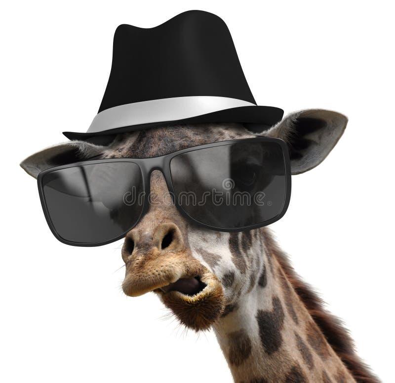 一位长颈鹿探员的滑稽的动物画象有树荫和浅顶软呢帽的 库存图片