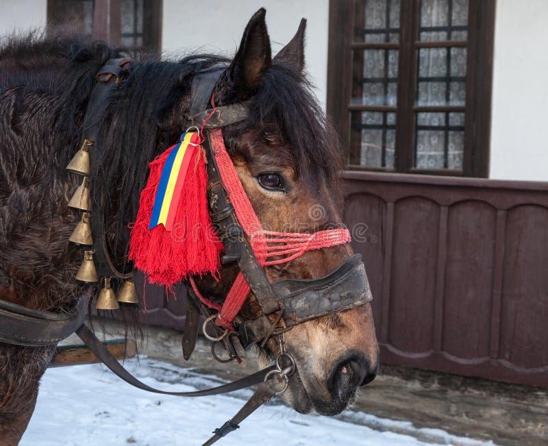 一匹传统罗马尼亚马的配置文件 免版税图库摄影