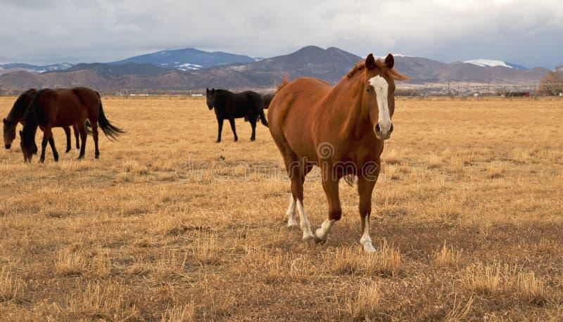 一匹好奇马 免版税库存照片