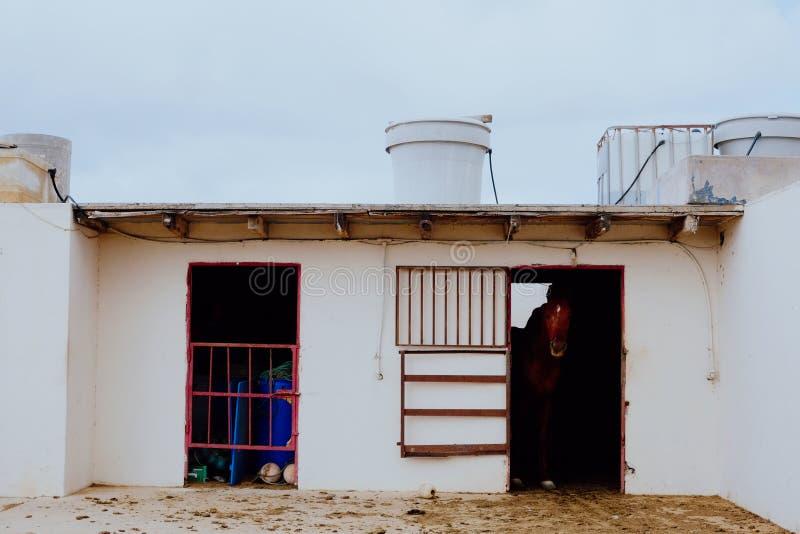 一匹孤独的马从大厦出来 免版税图库摄影