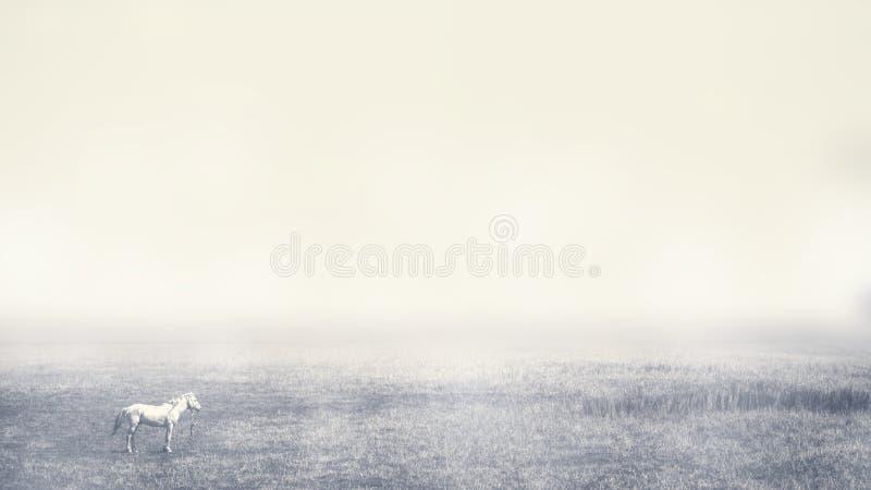一匹孤独的马在一有雾的上午吃草 剧烈的轻的背景 免版税库存图片