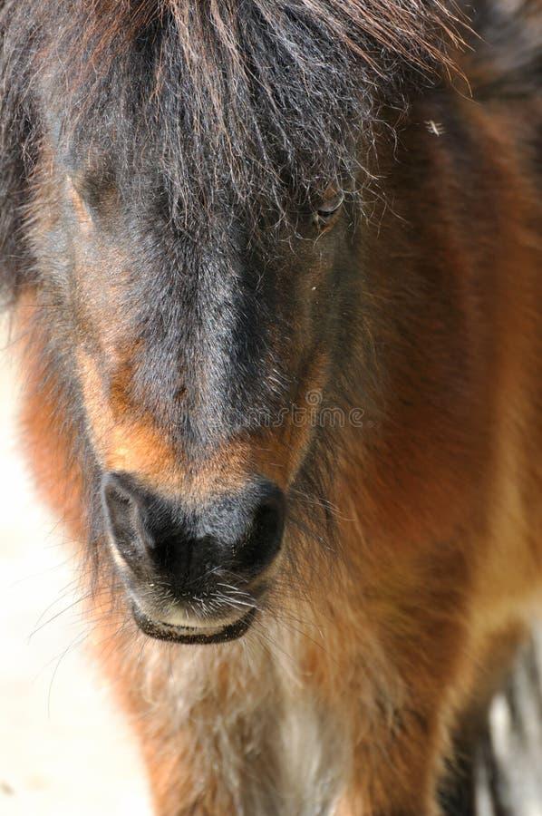 一匹小的马 免版税库存图片