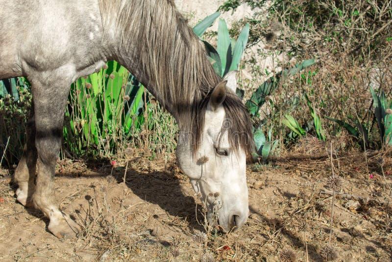 一匹灰色马本质上,在山和一个美好的风景的背景中 库存图片