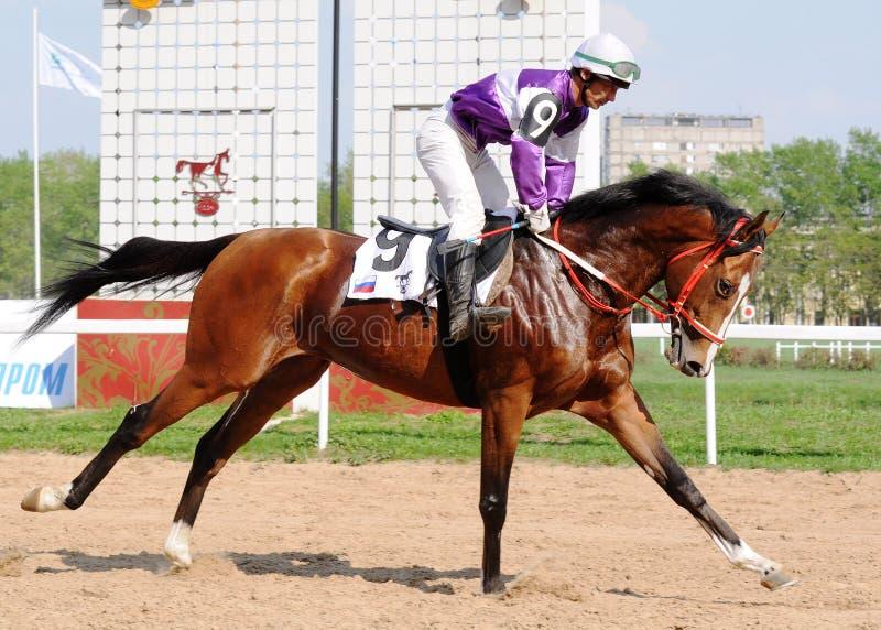 一匹良种赛马的骑师 免版税库存照片