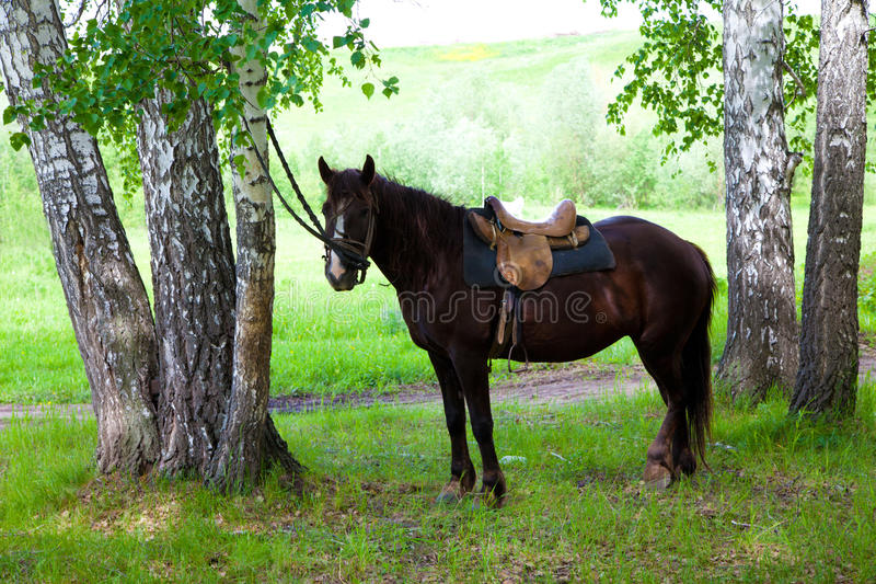 一匹被备鞍的马 库存照片