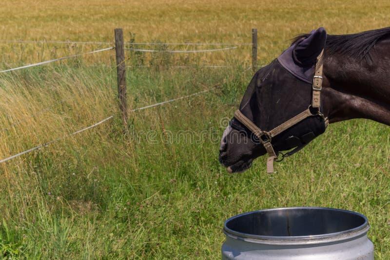 一匹被掩没的马是饮用水 库存图片