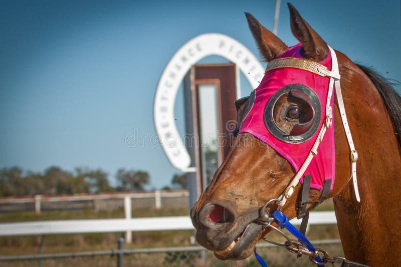 一匹赢取的赛马的顶头射击在偶然来临野餐的 免版税库存图片