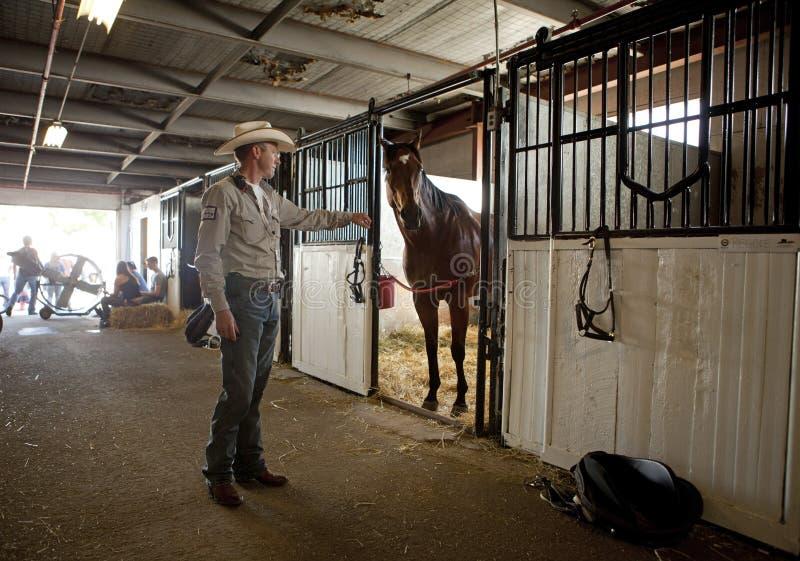 一匹马在槽枥,卡尔加里惊逃 免版税库存图片