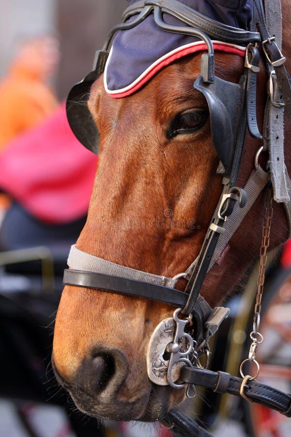 Download 一匹马的特写镜头在城市 编辑类照片. 图片 包括有 browne, 室外, 火焰信号器, 缩放, 本质, 旅游业 - 30328176