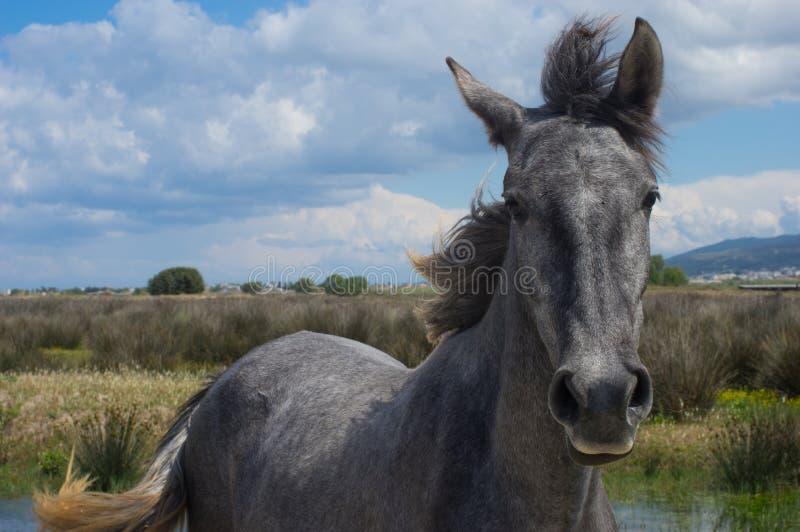 一匹马的画象由海的 库存图片