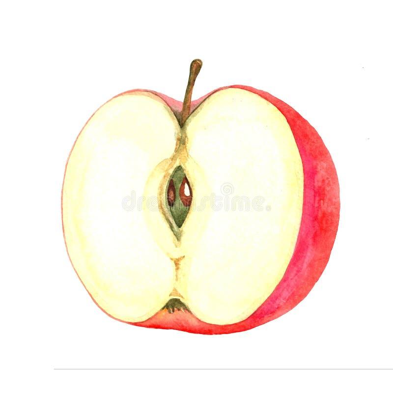 一半与骨头的红色苹果 库存照片