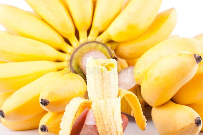 一半剥了蛋金黄香蕉的香蕉和手在白色背景健康Pisang Mas香蕉果子食物的 免版税库存照片