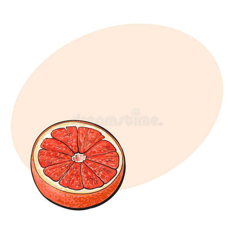 一半成熟粉红色葡萄柚,红色桔子,剪影传染媒介例证 库存例证