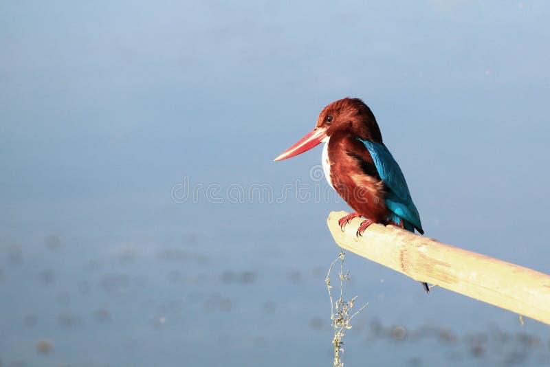 一只五颜六色和美丽的鸟 免版税库存图片