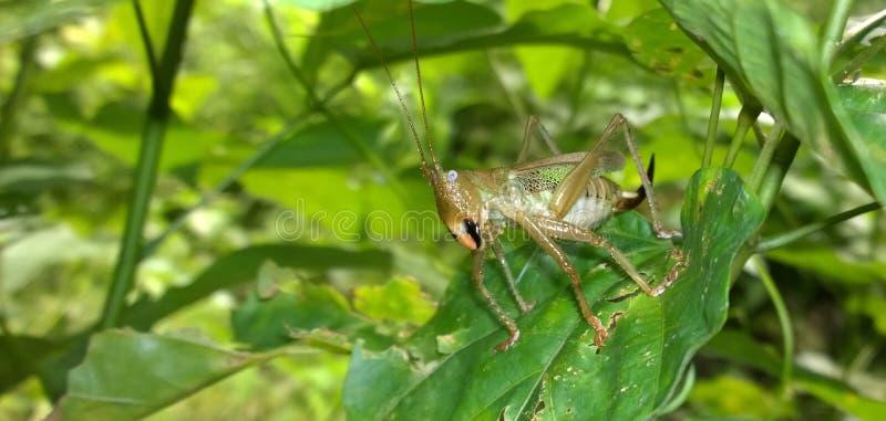 一只傲慢的昆虫 库存照片