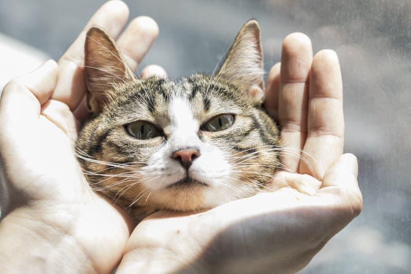 一只可爱的猫照片 免版税库存照片