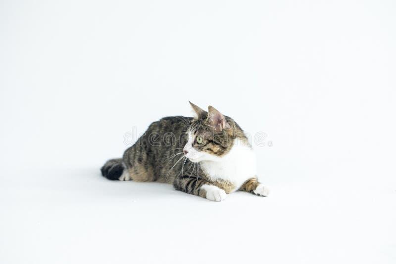 一只可爱的猫照片 免版税库存图片