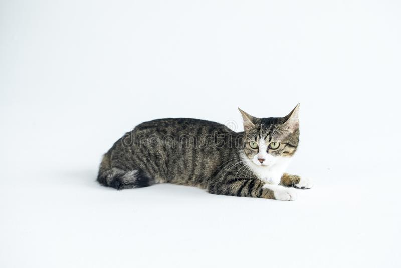 一只可爱的猫照片 免版税图库摄影